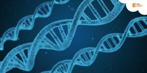 La Nutrigenética: la biología molecular en el campo de la nutrición