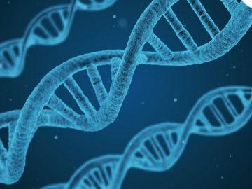 La Nutrigenética- la biología molecular en el campo de la nutrición
