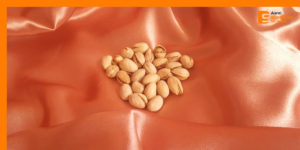Consumo de pistachos: beneficiosos para la salud
